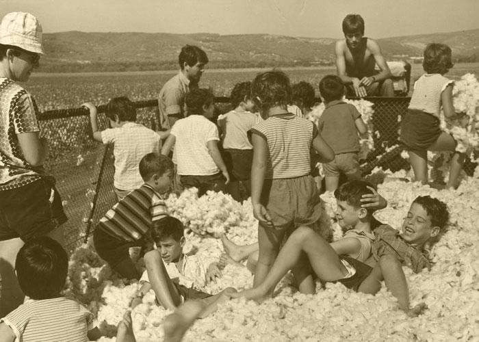 Children In Cotton 70